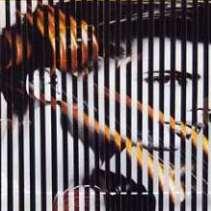 visual poems - body music III - Fantaisie